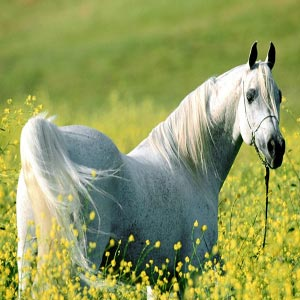 معنویت اسبی